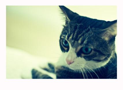 Sco Kitty